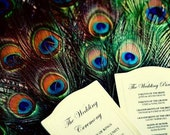 """20 Peacock Feathers - 10-12"""" Long"""