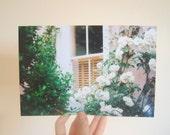 9 x 6 Roses Print