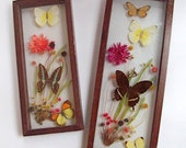 Vintage Dried Butterfly and Flower Arrangements in Shadowbox Frames