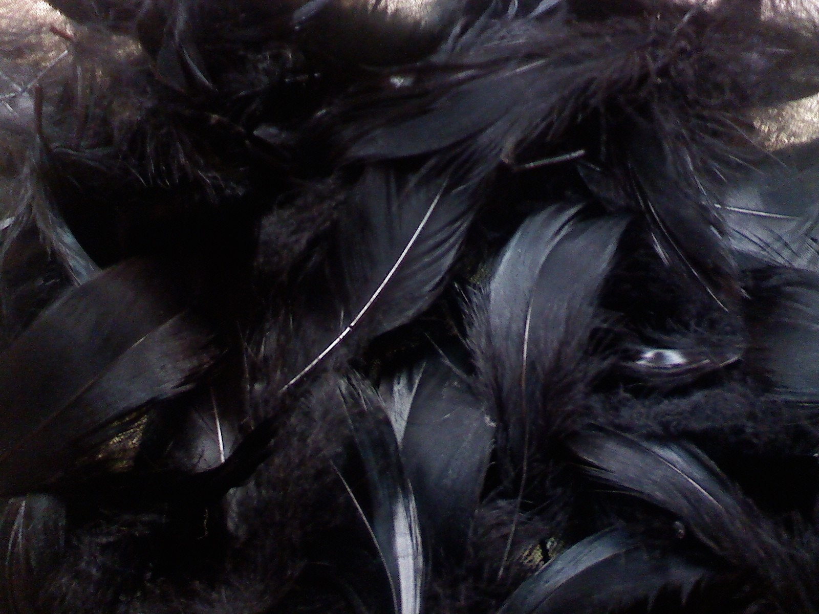 50 black feathers