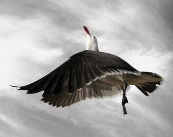 Bird Art Photography, Animal Photography, Bird Art, Nature Photography, Heermann's Gull, Home and Wall Decor, Float