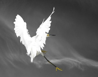Bird Art, Animal Photography, Snowy Egret, Bird Art Print, Fine Art Photography, Heart