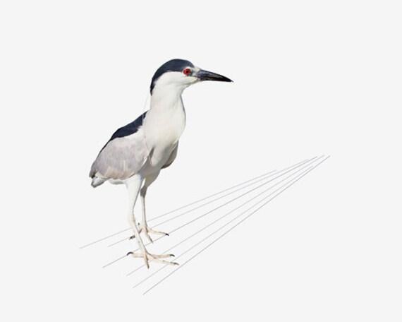 Animal Photography, Animal Art, Bird Art, Nature Photography, Fine Art Print, Heron, Profile
