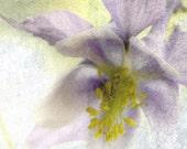 Memories to Keep 12x12 Fine Art Photo Print - vintage overlay - lavender yellow textured art -  home decor