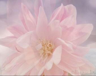 Pink Echo - 8x10 Fine Art Floral Print - soft pink petals - dreamy light - affordable home decor