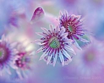 Succulent Blossoms 5x7 Fine Art Floral Print - dreamy light pink magenta blue sky - affordable home decor