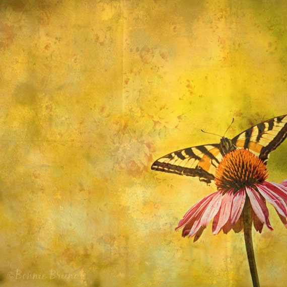 Nature Photography Swallowtail Butterfly on Pink Coneflower home decor - wall decor
