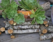 TWIG BASKET - ECO GREEN - HANDMADE Rustic Garden Shabby Chic Wooden Twig POTTED PLANT CONTAINER for the garden or interior display