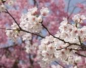 JAPANESE CHERRY BLOSSOM Solid Perfume Pot
