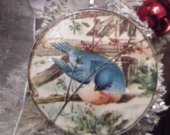A Blue Bird on the Fence