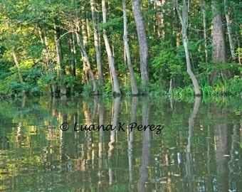 Louisiana Bayou Photo Lacombe