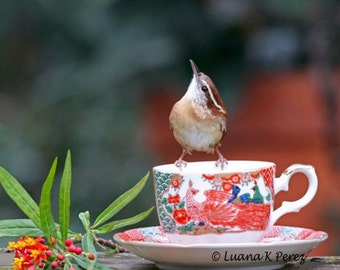 Carolina Wren Having Tea in Luana's Cafe' - Real Photo