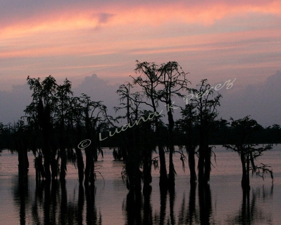 Sunset In Louisiana Swamps