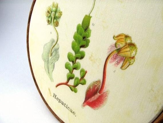 Antique Botanical Mosses hoop framed wall decor