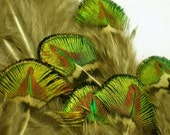 Small Green and Gold  Peacock Scallop Plume Feathers for craft, headbands, hats and hair clips (12 PIECES)