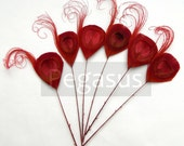 RUBY RED Peacock Feather Picks (6 Feathers)(17 color options) for wedding invitations, boutonnieres, bouquets, hats, millinery