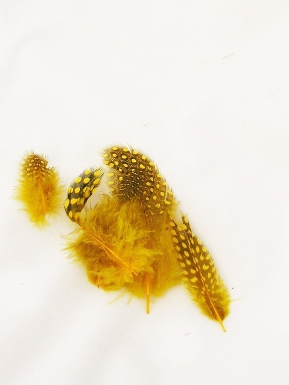 Yellow Spotted loose Guinea Hen Feathers (12 Feathers, 2 size option) DIY millinery supply for headdresses,hair clip,earring,fascinator