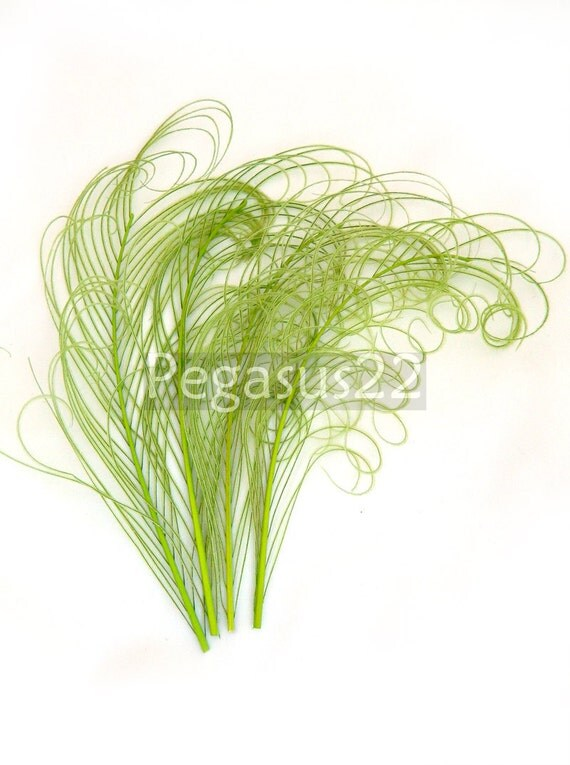 LIME GREEN Peacock curled feather sprigs (5 -8 Inches)(4 or 12 SPRIGS)  plumes for hats,fascinators,costume headdress,brooch bouquet