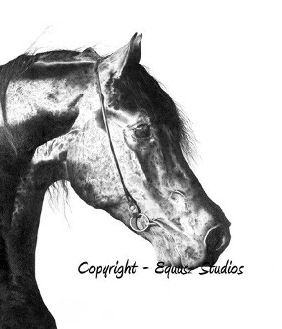 Black horse head drawing - photo#11