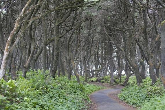 Into the Coastal Trees -near Ona Beach, OR