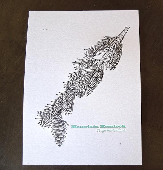 Mountain Hemlock, Letterpress tree print