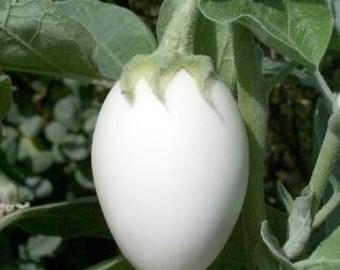 Egg Tree Seeds