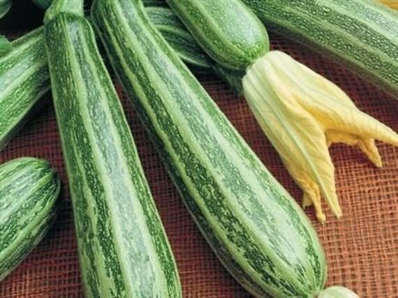 Organic Cocozelle Italian Zucchini Seeds