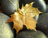 FREE SHIPPING - - REAL SUGAR MAPLE LEAF IN 24KT GOLD- NECKLACE