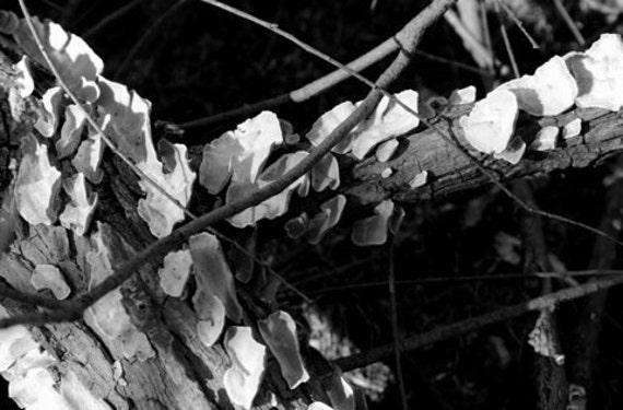 Sticks and Shadows
