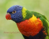 Bird Fine Art Photograph  Bright and Beautiful  8 x 10
