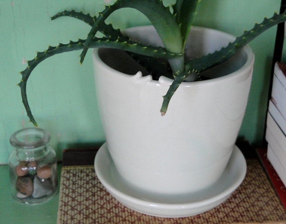 Ceramic Planter with Attached Tray and Drainage Hole-medium