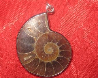 Beautiful  Rare Fossil Moroccan Ammonite Pendant