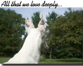 Greyhound, Whippet reflecting on a lost friend, set of 4
