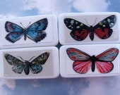 BUTTERFLY -vintage naturalist - Magnet Gift Set