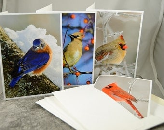 Backyard Birds, Note Card Set of (4)