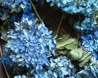 blue dried HYDRANGEAS BLUE all over hydrangeas