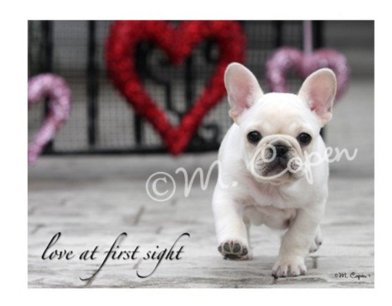 French Bulldog Valentine's Day Cards - Creme French Bulldog - Love at First Sight  - Set of 2 Cards