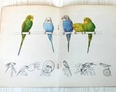 Vintage Booklet Parakeets Are Fun by French's Parakeet Food