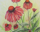 Framed CONEFLOWERS Fresh Florals Hand Colored Botanical Print