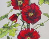 Framed HOLLYHOCKS Fresh Florals Hand Colored Botanical Print
