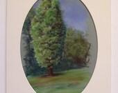 Original Plein Air Pastel Painting OH CEDAR