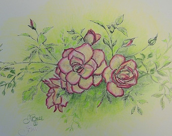 ROSES IN CREAM - Hand Colored Botanical Print 11 x 14