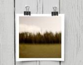 Fine art photograph (landscape 034) green canadian woodland home decor