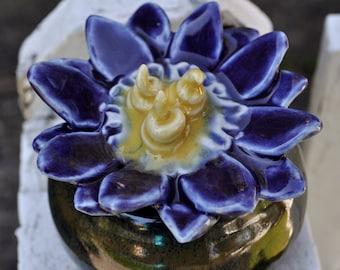 Purple Passion Pot