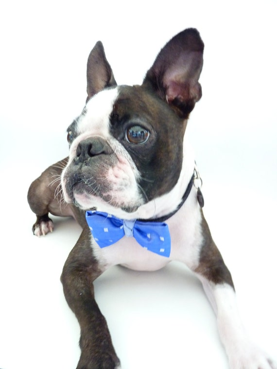 "Pet Bow Tie / The ""BubbaBow"" Tie for Happy Pets- Blue Silk / Made to Order"