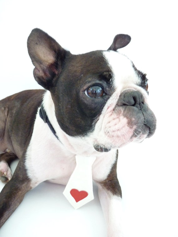 """My Valentine Pet Tie The """"Bubba Tie"""" for Happy Pets in Ivory Satin Silk with Leather Heart Applique / Ring Bearer / Ready to Ship"""