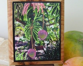 Mango Plaque in Mixed Media on Reclaimed Board