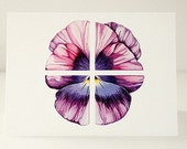 4x5 Notecards w envelopes - Pansy by Eriksdotter