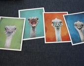 set of four ostriches