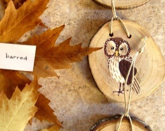snowy owl, barred owl, or barn owl